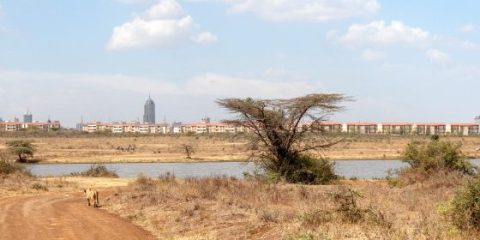 Experiencing Nairobi ~ The City, The Animals & The People.