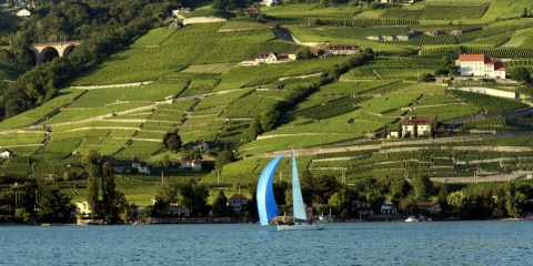 Day Five: Day Trip to Lavaux, Vaud Region