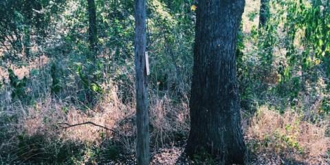 Trail Review: John F Burke Preserve