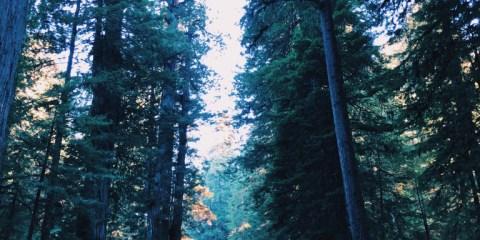 Best Kept (Non-) Secret at Redwoods