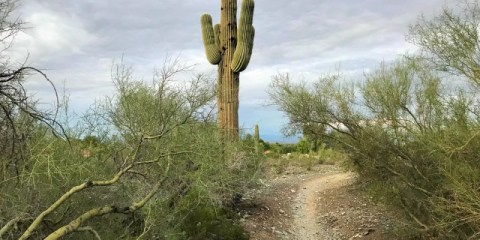 Finally Fall in Phoenix – Time to Hike in the Desert