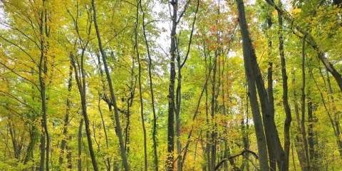 A Trip to See Fall Leaves – One Day in New Jersey