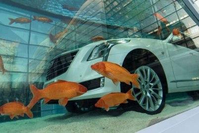 Une voiture luxe Cadillac dans un immense poisson d'aquarium dans un magasin à Shanghai, en Chine 2016/02/29