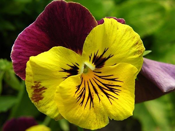 fiore12.jpg