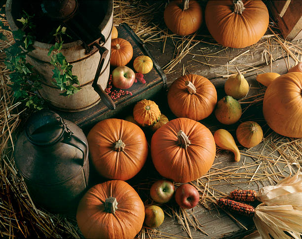 Pumpkin and fruit harvest in barn with milk can.