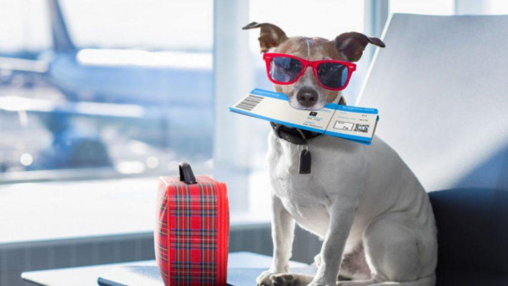 cane-aereo-1280x720