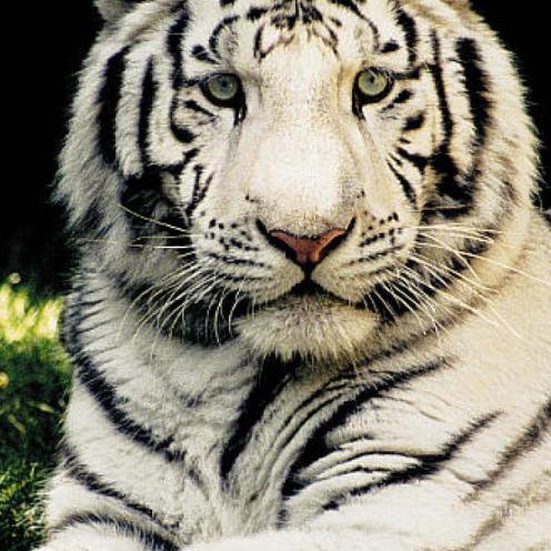 Giornata-mondiale-della-fauna-selvatica-2