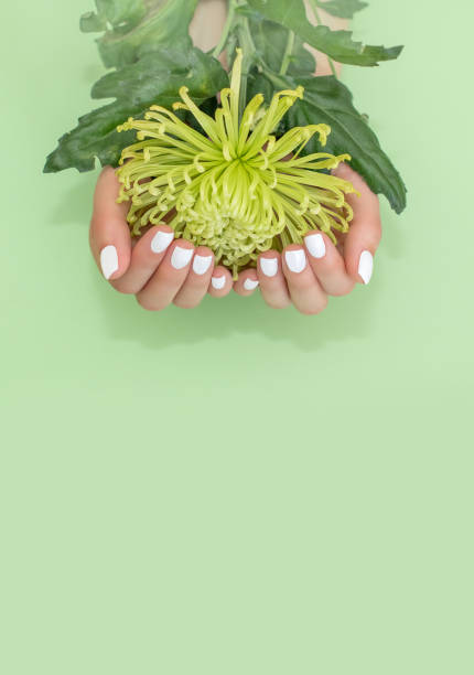 Closeup view of woman with flower on color background. Spa treatment.