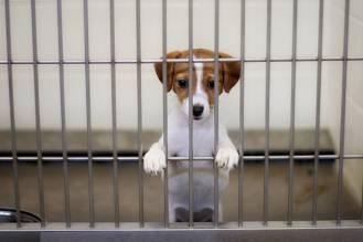 dog eagerly awaits adoption from the animal shelter