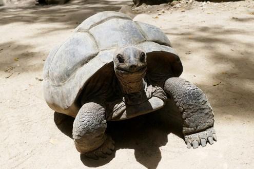 tartarughe-seychelles-giganti-pixabay