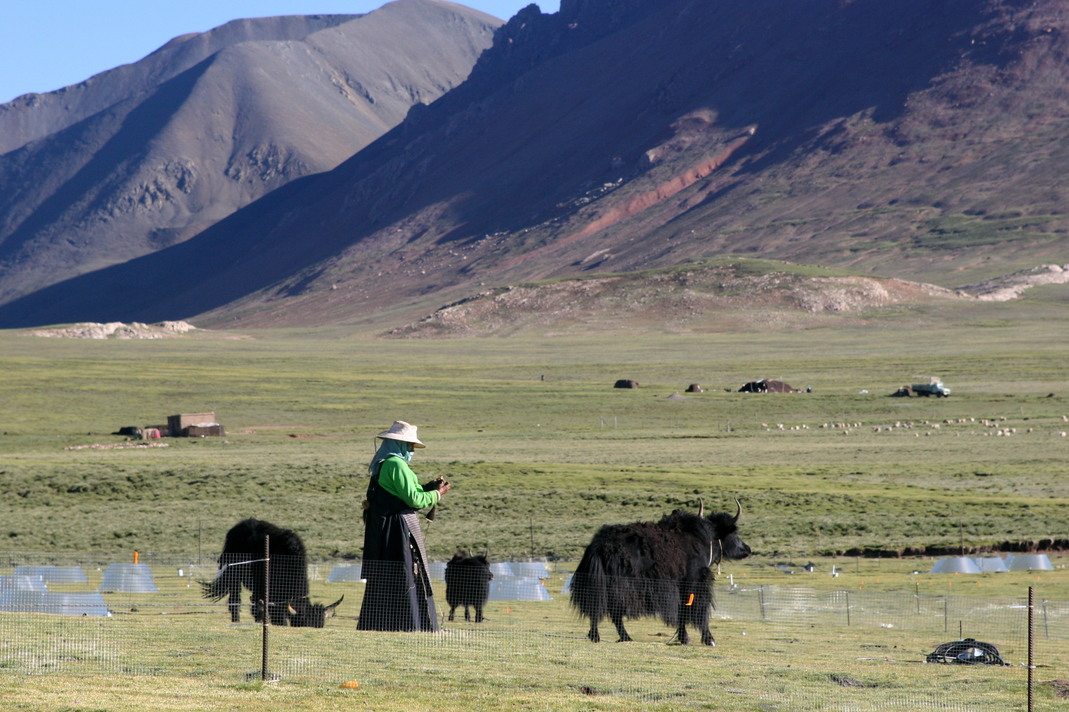 The Tibetan lifestyle may be severely affected future climate changes ...
