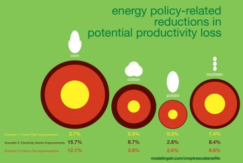 A team of researchers projected the effects of carbon reduction policies on the productivity of key crop and tree species. This infographic shows the degree to which three different U.S. carbon reduction policy scenarios would reduce potential productivity loss in four key crops in the year 2020. Credit: Drexel University.