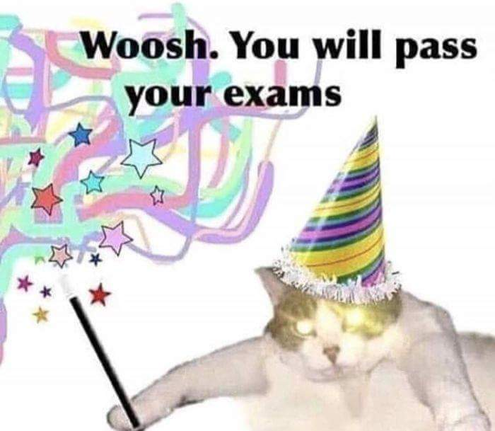 A magical cat granting you special powers to pass your exams