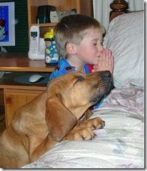 Nen i gos pregant