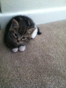 Nala the kitten