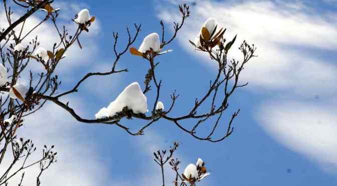 MEET MEMBER HELEN ABRAMS:  Shutterbugs in the Snow