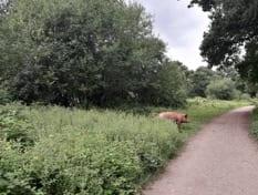 Free roaming animals at Knepp Estate