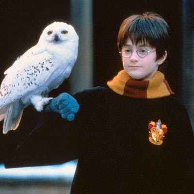 Image result for hedwig