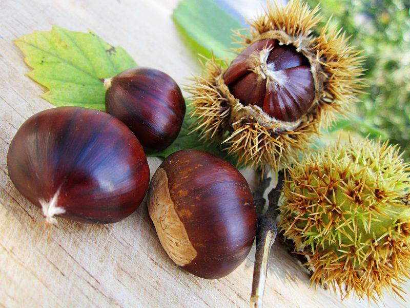 La castaña, el fruto del otoño