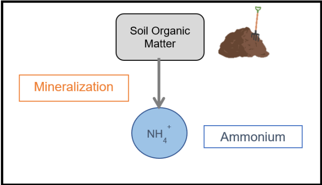 mineralization process