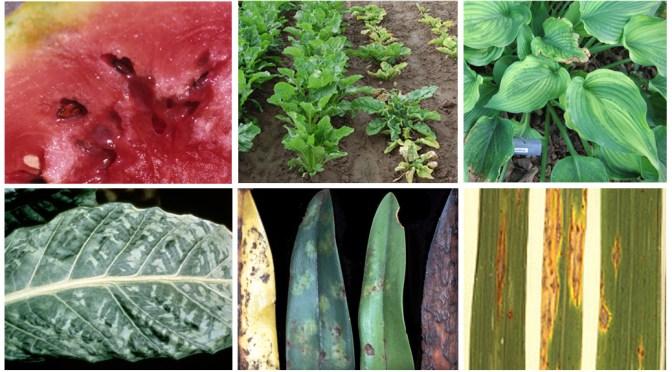 Plant pathogens montage