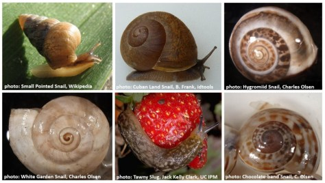 snails and slugs featured image