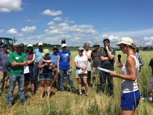 Sandra Wayman presents about perennial grains at the Musgrave 2016 July Field Day