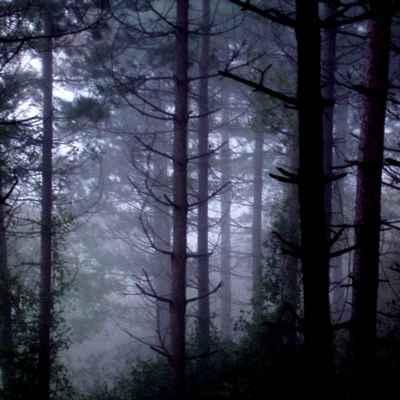 20091119223056-bosque
