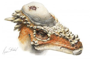 Fig.1 – A pachycephalosaur suffering an 'ouchie', or cranial lesion (PLoS)