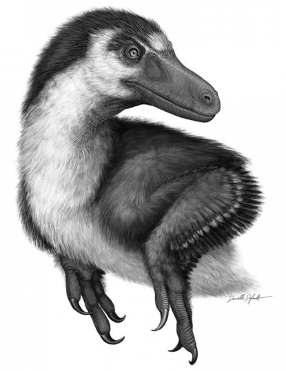 Acheroraptor, in all its glory