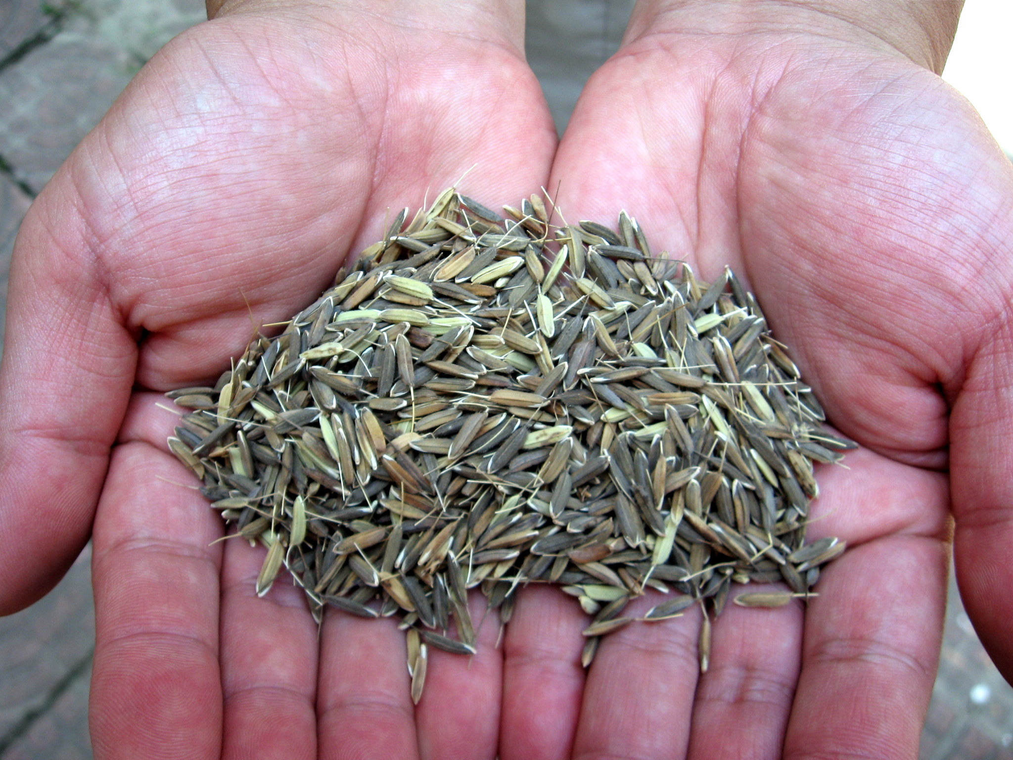 Improving Seeds To Meet Future Challenges
