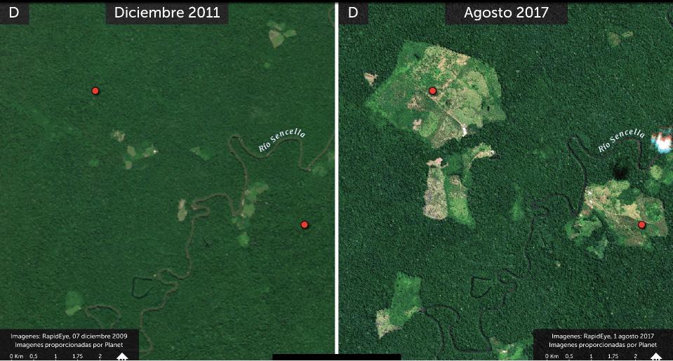 A partir del 2010 se agudizó la deforestación en el departamento del Putumayo. Foto: MAAP