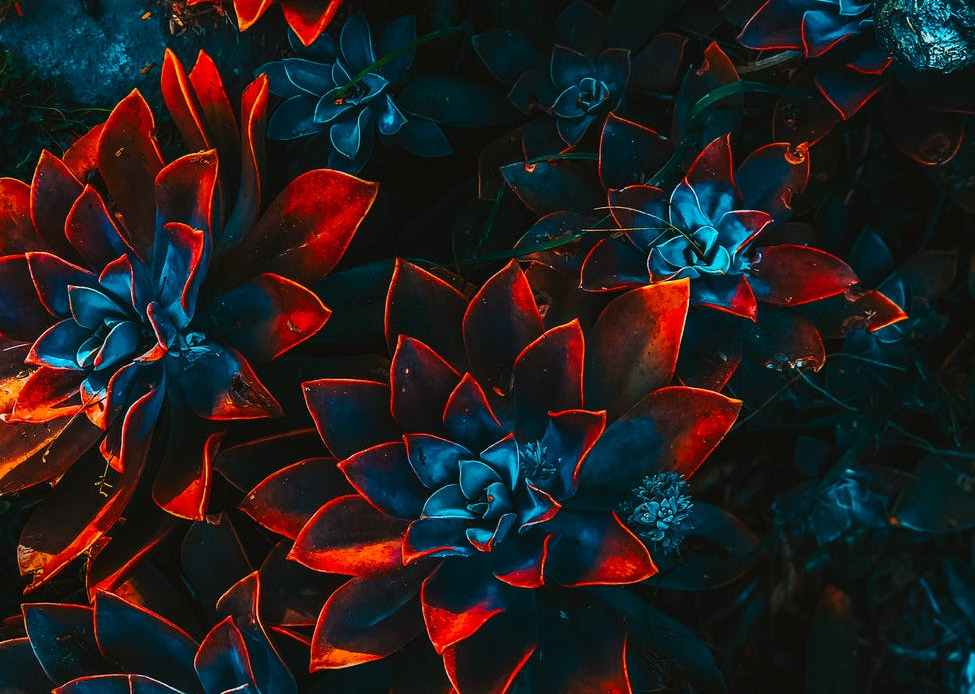 blue and red plants