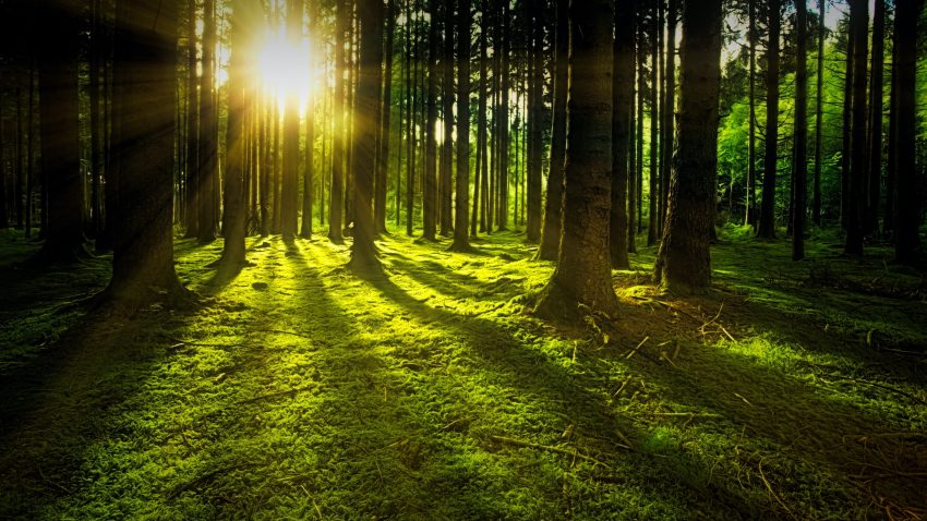 Powerful Business Management iOS & Android App- a forest of trees