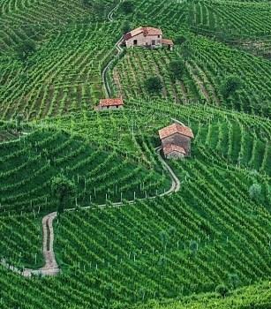 Pesticidi e bollicine: rischi per paesaggio e salute