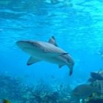 Composto no fígado do tubarão poderia reduzir o mal de Parkinson