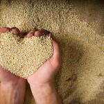 Equipe de pesquisadores internacionais estuda genoma da quinoa