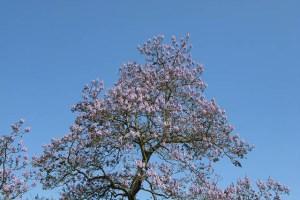 A árvore que pode combater o aquecimento global