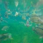 Empresa apuesta en la innovación en centro de crianza de peces