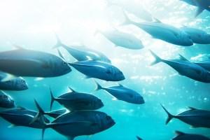 funiber-fluorescente-pescado