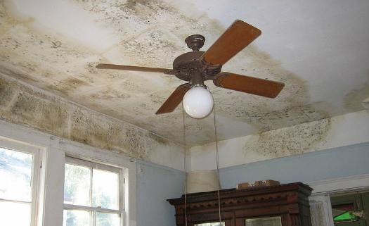 Como tirar mancha de mofo do teto e parede da casa? 9