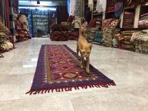 Muskillah testing out a new carpet