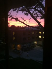 The Giant Tree's branches are featured in this sunset picture I took from my window on Van Vleck's 3rd floor.