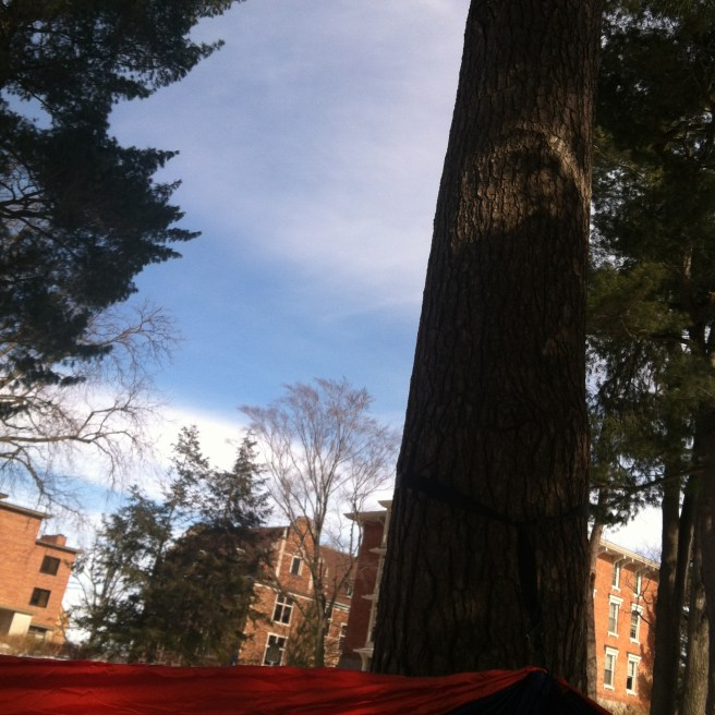 Blue skies, sunshine, and pine trees as seen from the hammock