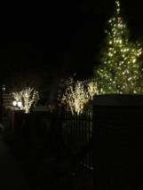 trees and bushes decorated with Christmas lights