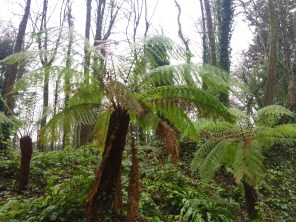 We also followed a fern path and saw huge ferns growing! They were probably on the grounds for hundreds of years!