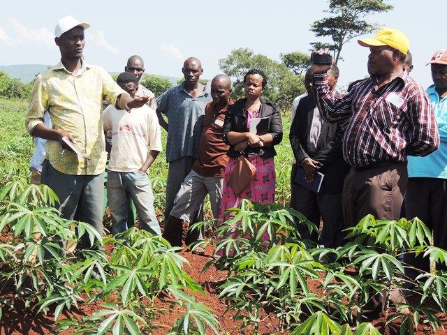 Cropit Nigeria Limited International Institute Tropical Agriculture Iita