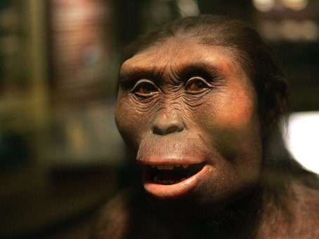 Chicagos Field Museum Opens New Exhibit On Evolution