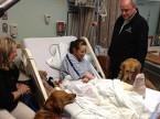 rpt-comfort-dogs