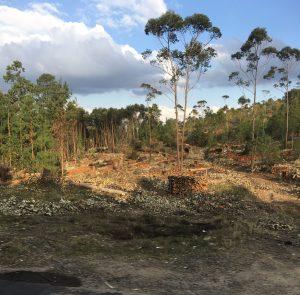 """""""Slash and Burn"""" forestry in Madagascar"""